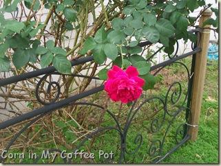 Garden stuff - Nov 2011- Fall mushroom 018