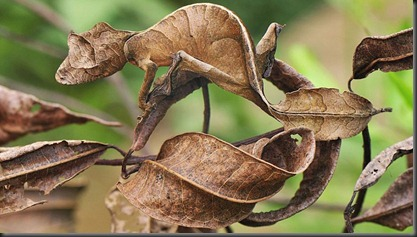 animal-camouflage-20