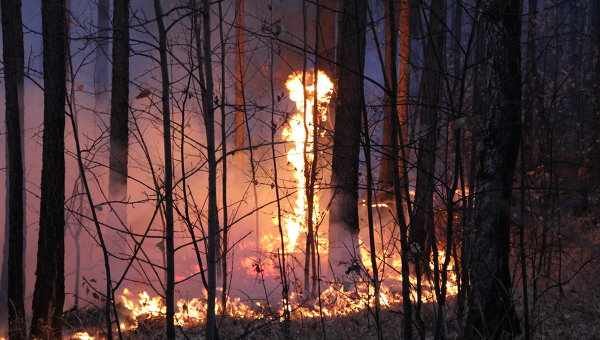 A forest fire burns in the Siberian republic of Buryatia, 2 September 2013. Photo: Photo Press Service of the Russian Ministry of Emergency Situations in the Republic of Buryatia