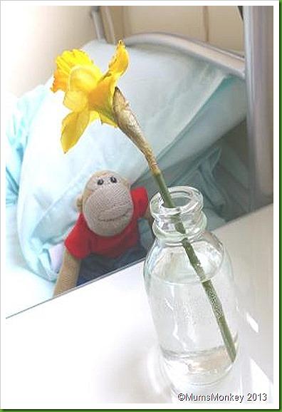 Daffodils wolverhampton