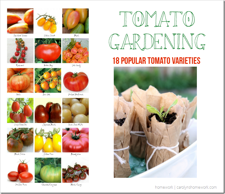 Tomato Gardening 18 Popular Tomato Plants for your garden