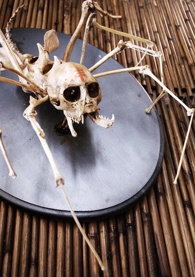 Spider He Anji Marth Taxidermy