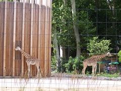 2007.07.05-003 girafes