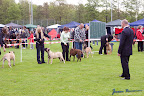 20100513-Bullmastiff-Clubmatch_30882.jpg