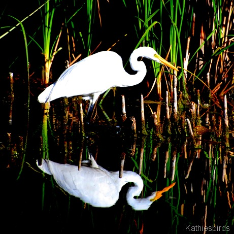 3. egret-kab