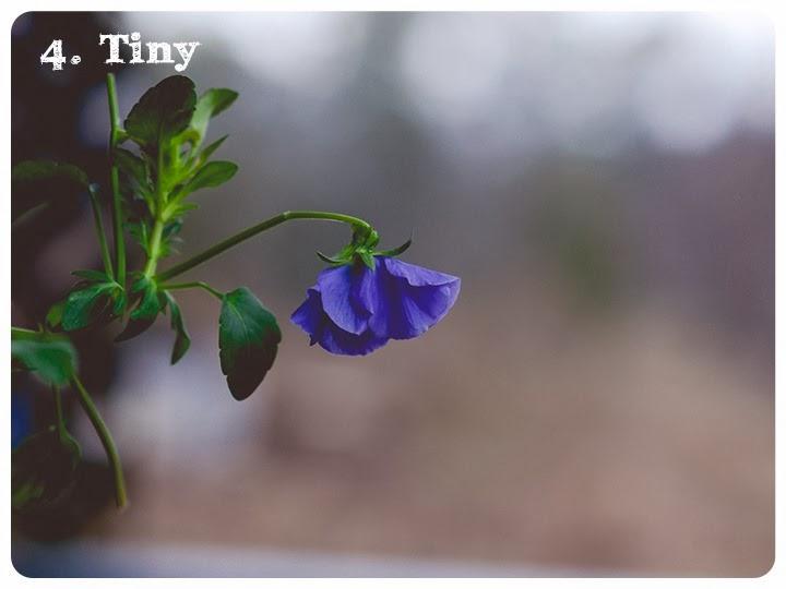 4 tiny