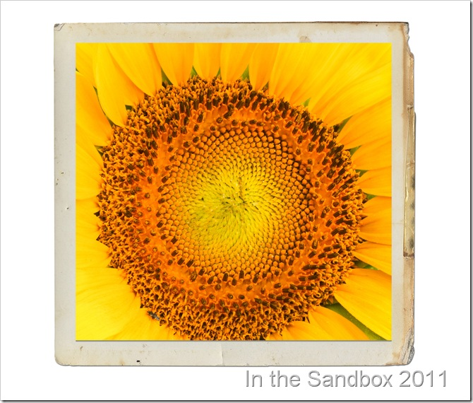 sunflower macro_with paper frame