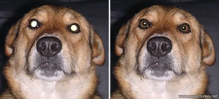 How To Fix Glowing Dog Eyes In Photoshop
