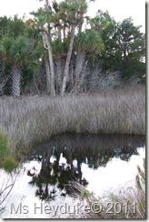 2011-11-12 Merritt Island NWR 003