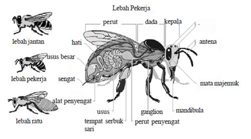 bagian bagian tubuh lebah