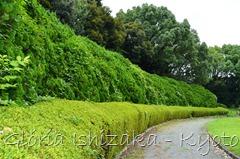 Glória Ishizaka -   Kyoto Botanical Garden 2012 - 100