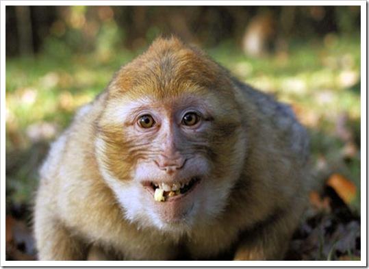 fotos-animais-sorrindo-fofos-7