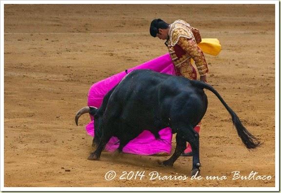 Toros 2014 (1)-47