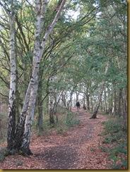 IMG_0154 Woodlandpath