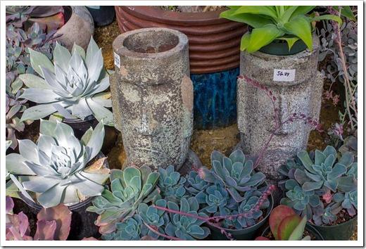 120928_SucculentGardens_face-planters