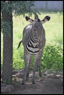 Zoo5 075