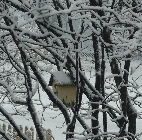 [Snow%2520on%2520birdhouse%255B3%255D.jpg]