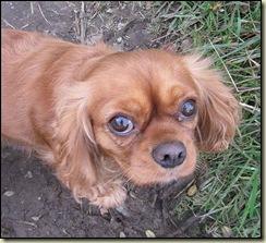 A dog at Fullwood