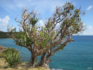 Baum_mit_Aussicht