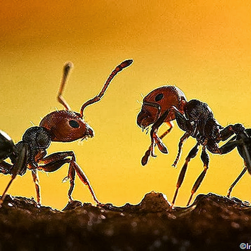 TOP 10 AWESOME THINGS YOU DIDN'T KNOW ABOUT ANTS