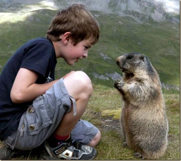 L'enfant et les marmottes-004