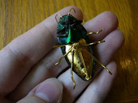 Insect Jewelery