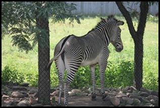 Zoo5 054