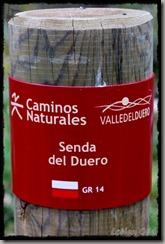 SendaDelDuero (99)