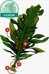 สาหร่ายอากาเมะ ( Wakame Seaweed )