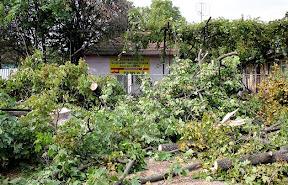 В Ужгороде на Швабской срежут все деревья 4.jpg