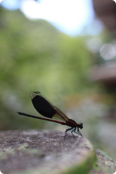taiwan057-petit