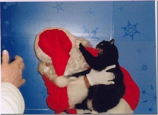 Gatos odeiam o natal (9)