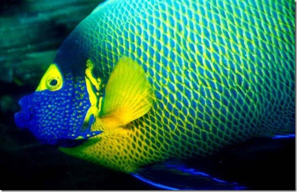 Fotos subaquáticas de David Doubilet (36)