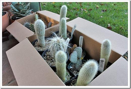 110114_cactus_haul1