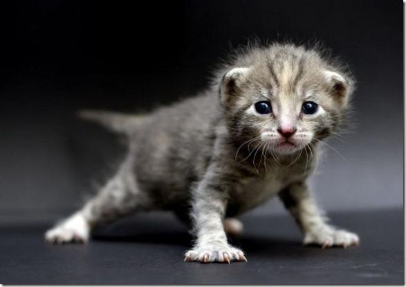 cute-funny-animals-16