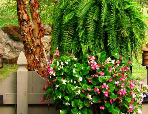garden6_edited