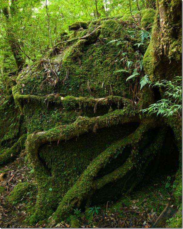 floresta no japão (3)