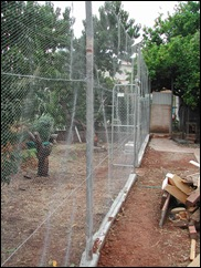 This enclosed orchard (under construction) is needed to keep possums and parrots from the peach trees. The lemon tree is to the right.