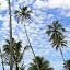 Walking In The Village Before Lunch - Suva, Fiji
