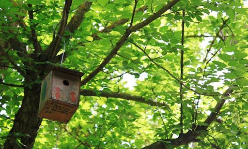 Caseta d'ocell.JPG