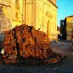 scigliano_live_1_20101009_1875773110.jpg