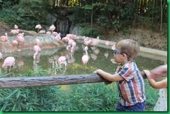 Ty flamingos
