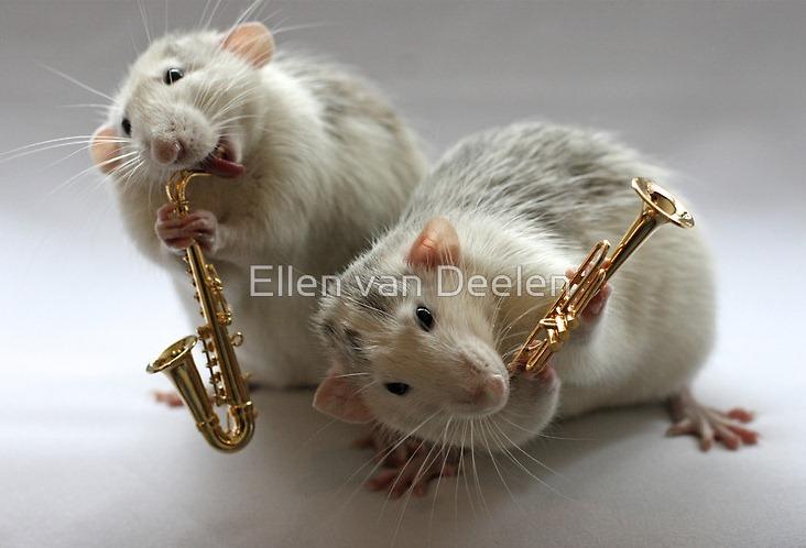 rat-musicians-005