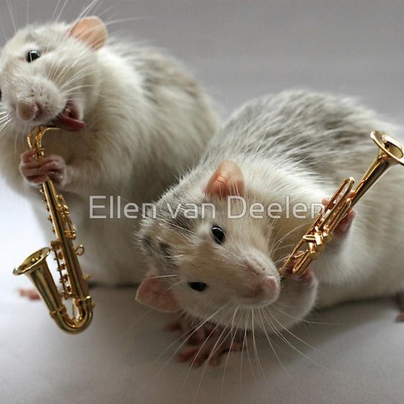 Adorable Rat Musicians by Ellen van Deelen