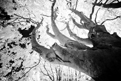 The-Tree-8