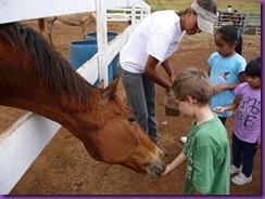 horse rescue 061
