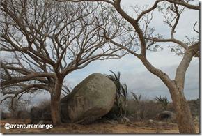 Árvores no Sertão