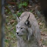 Wildpark-PF_2012-04-29_1011.JPG
