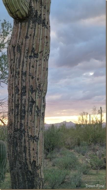 Saguaro NP West_097