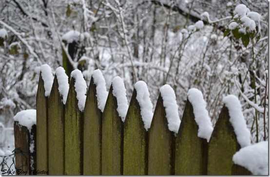 Winter2015 (79)